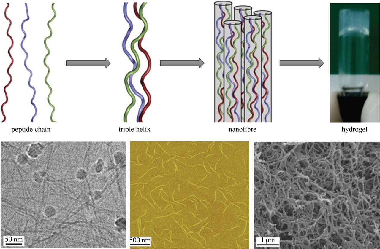 Crafting of functional biomaterials by directed molecular