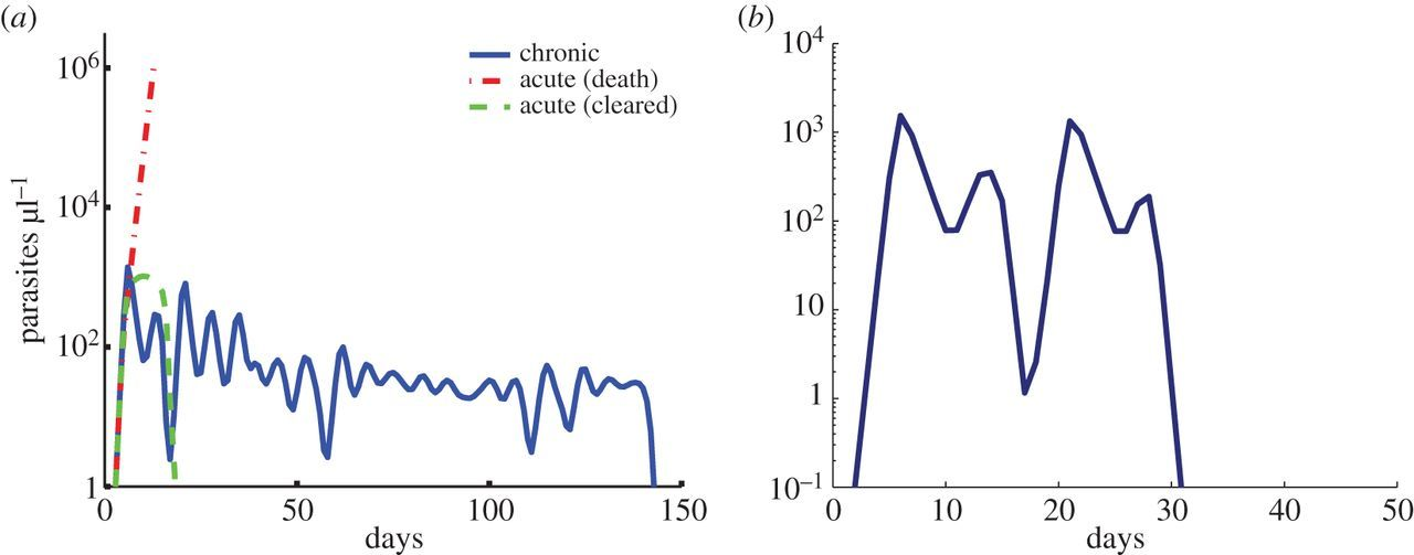 Dissecting the determinants of malaria chronicity: why