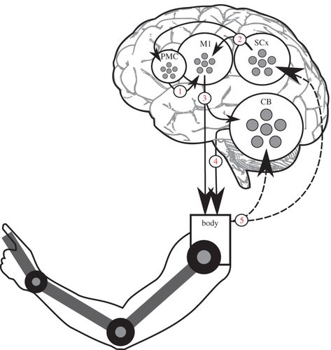 A Spiking Neural Model Of Adaptive Arm Control