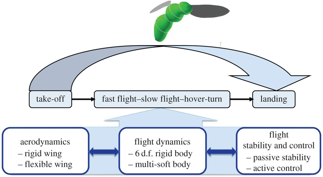 Aerodynamics, sensing and control of insect-scale flapping