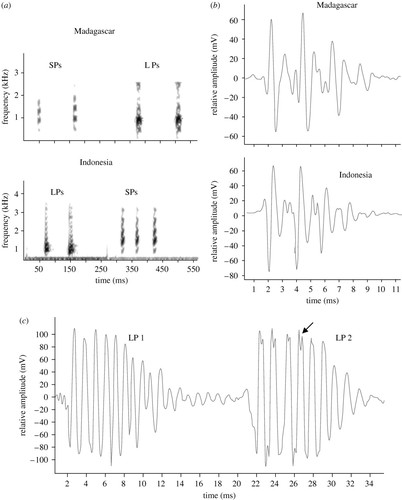 Geographical variation in sound production in the
