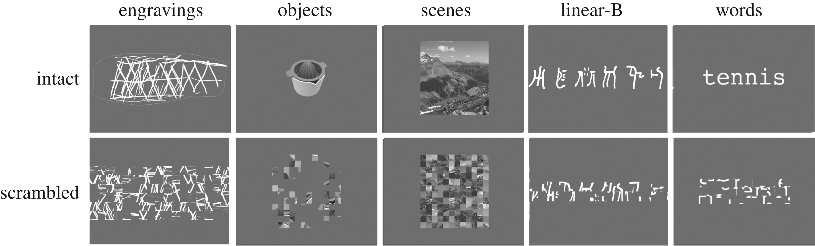 Neuroimaging supports the representational nature of the earliest