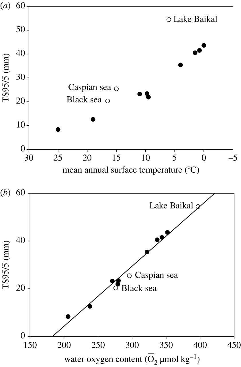 Thermal limits and adaptation in marine Antarctic ectotherms