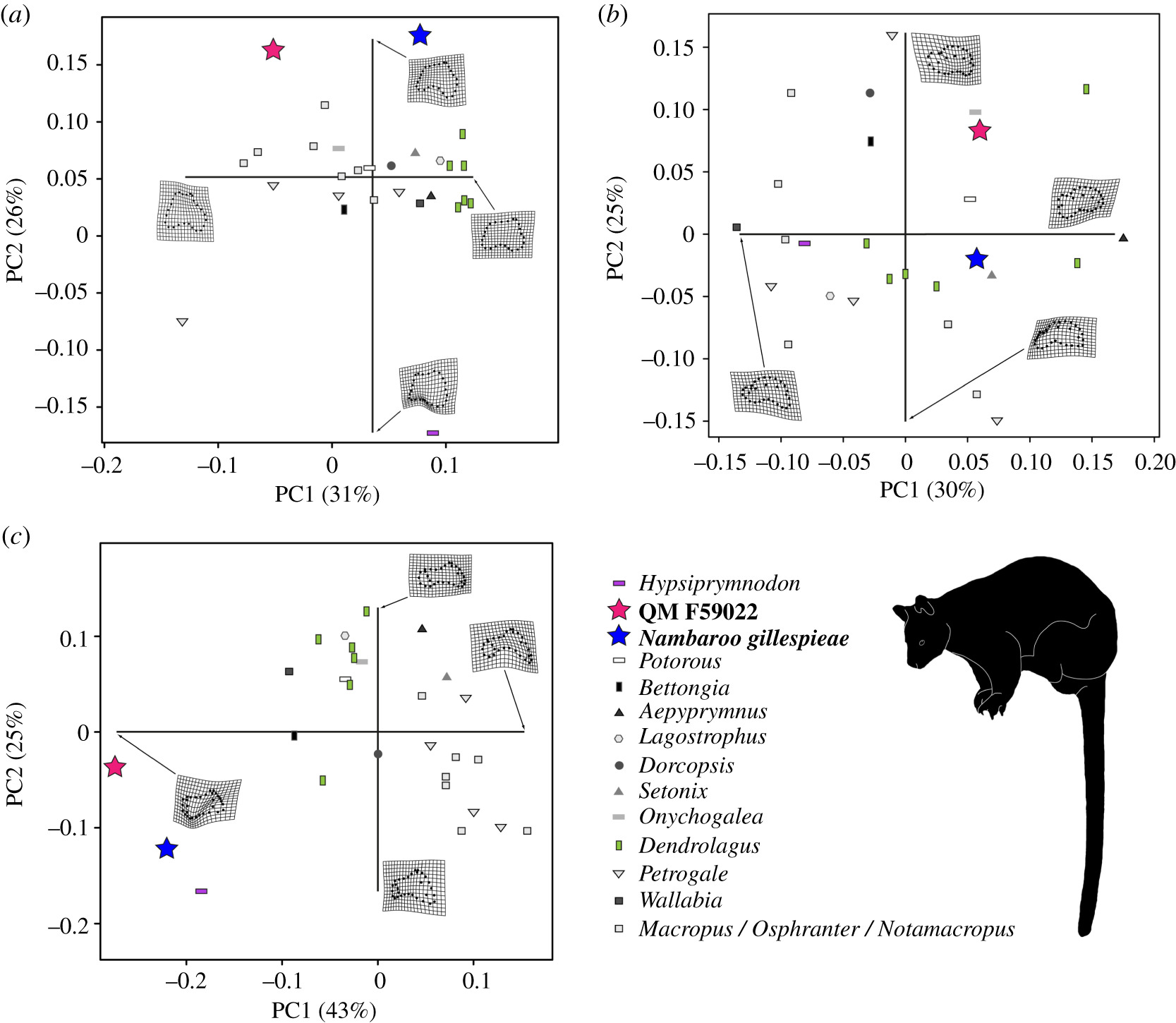 Climbing adaptations, locomotory disparity and ecological