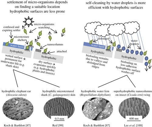 Biofouling: lessons from nature | Philosophical Transactions