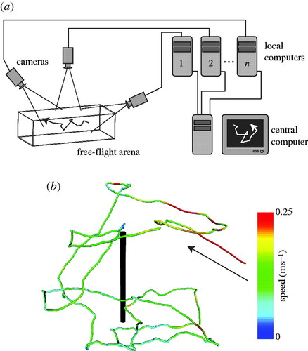 Multi-camera real-time three-dimensional tracking of
