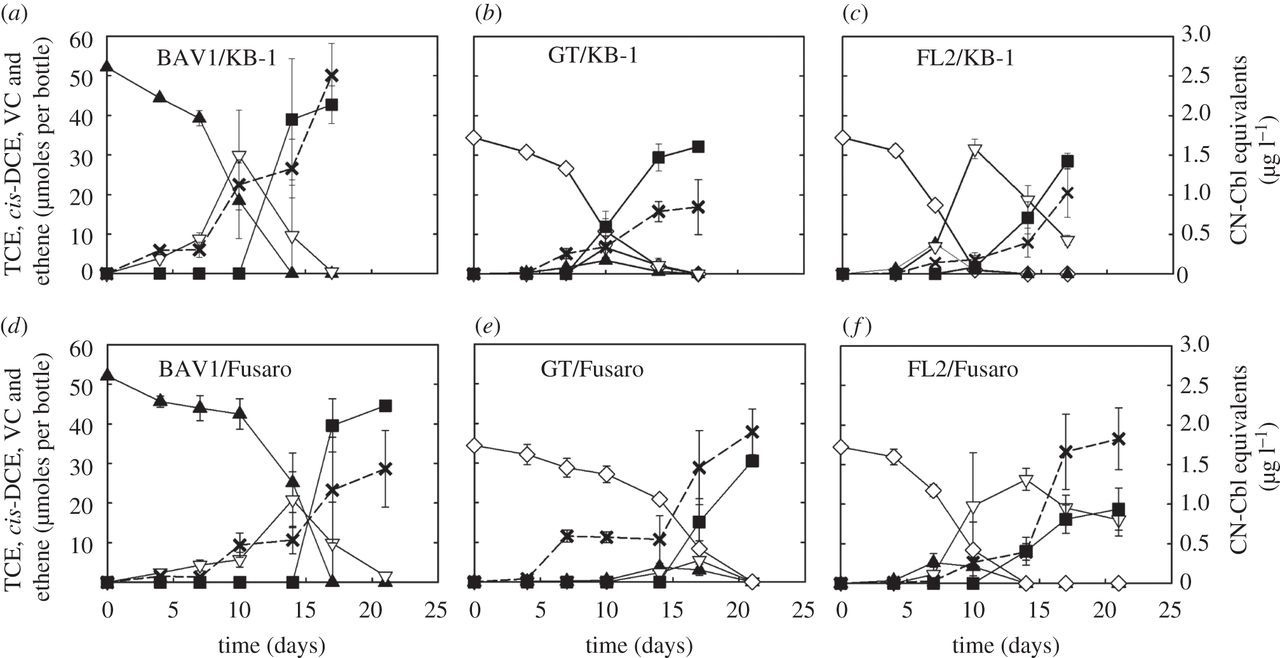 Guided Cobalamin Biosynthesis Supports Dehalococcoides
