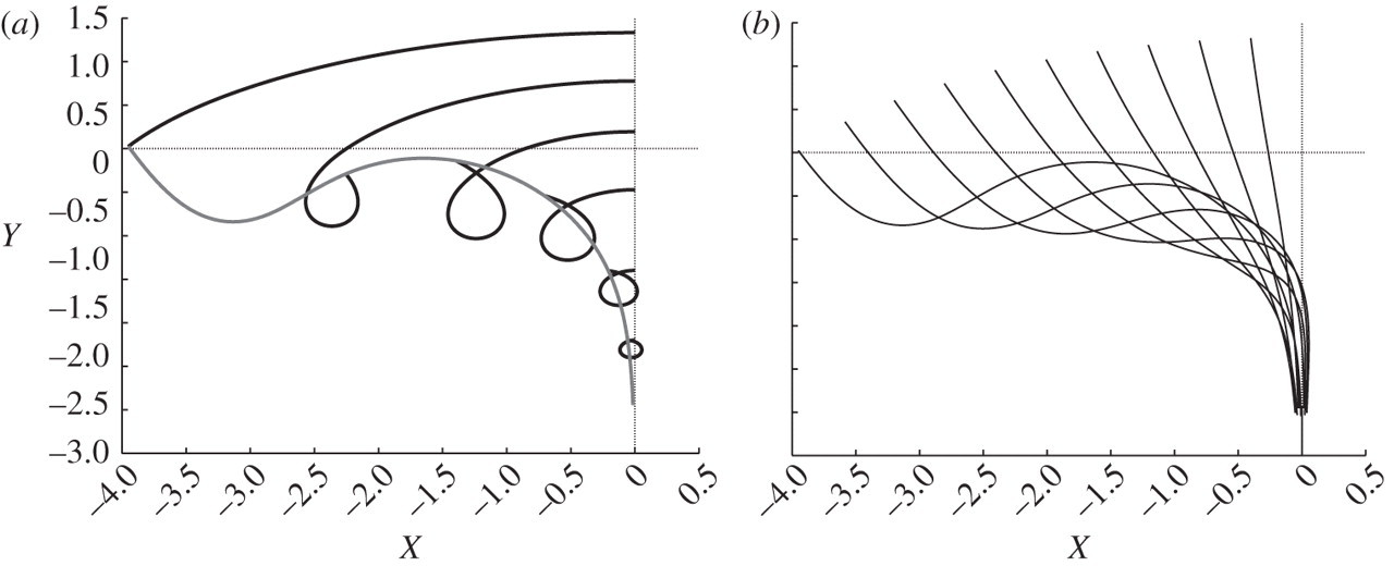 Trajectories of fluid particles in a periodic water wave
