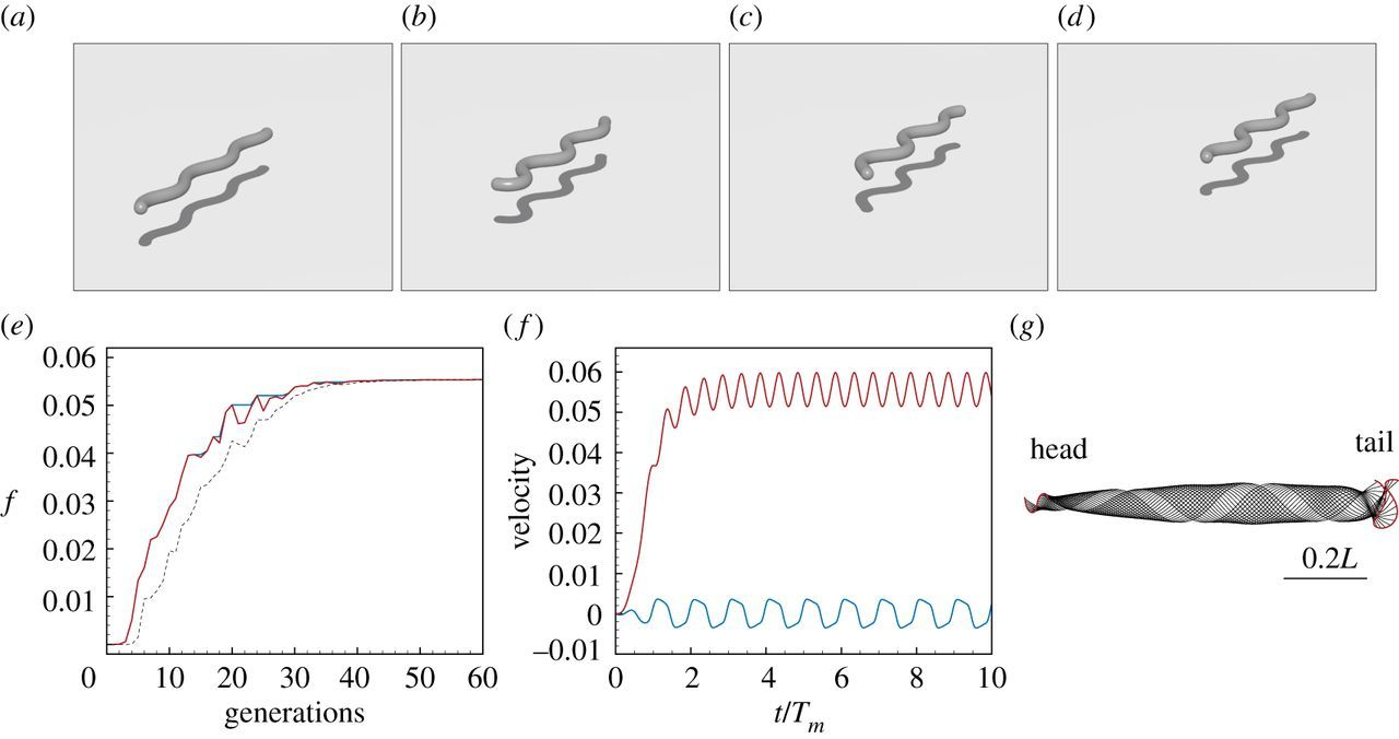 Forward and inverse problems in the mechanics of soft