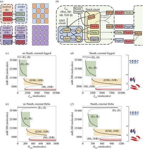 Numb prevents a complete epithelial–mesenchymal transition